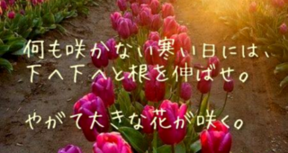やがて大きな花が咲く